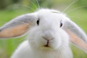 Первый в России онлайн-ресторан от White Rabbit Family запущен